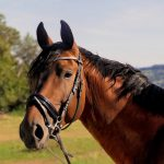 Nowoczesne ujeżdżalnie dla koni