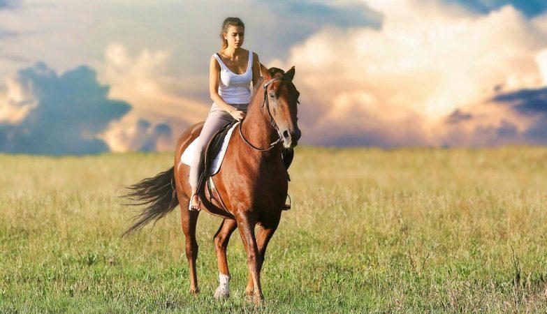 Hale jeździeckie dla koni